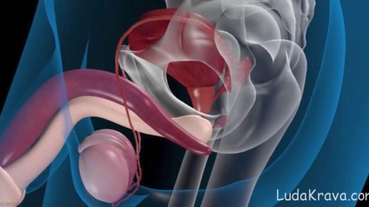 Receptek a prostatitisből Vangaból