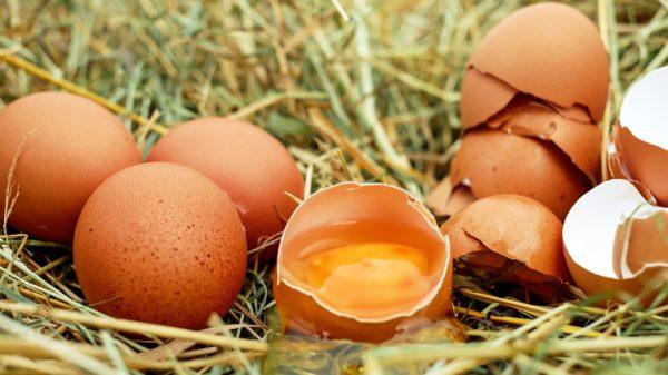 Kokošja jaja zdravlje