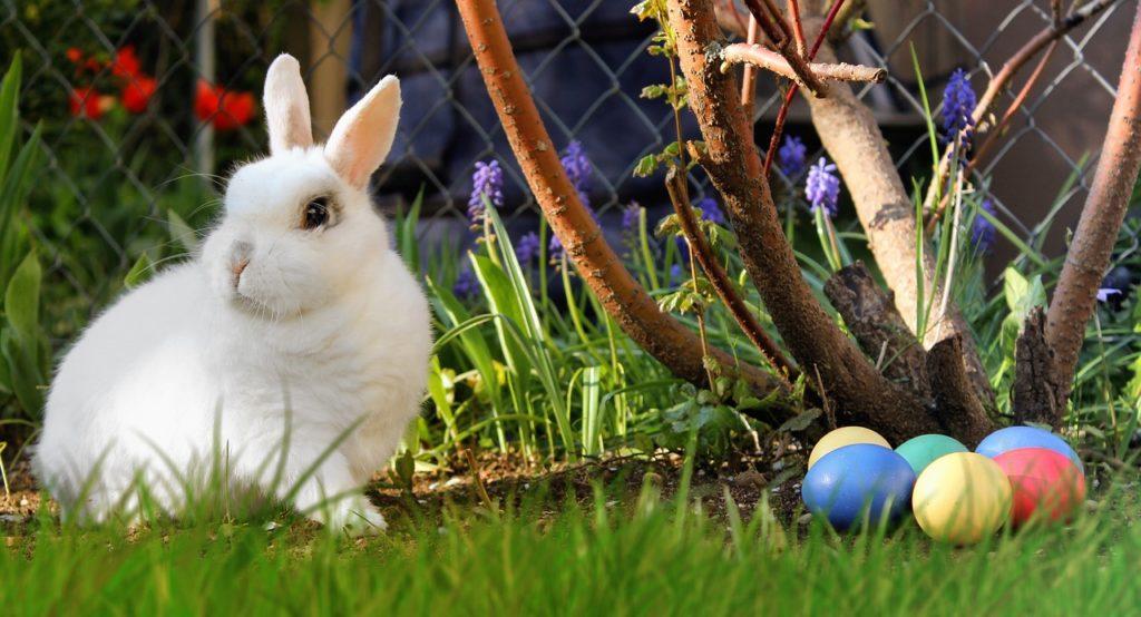 Čestitka za Uskrs Zec i jaja